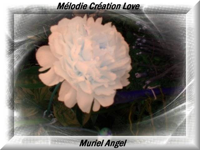 creation-dream-aussi-belle-de-nuit-rose-30-ma