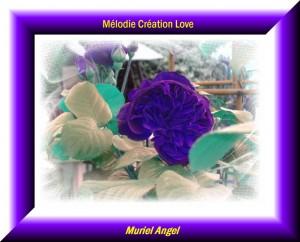 creation-dream-evasion-190-ma2-300x242