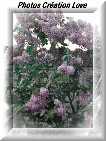 creation-dream-lilas-mauve-4-photos-crea-love