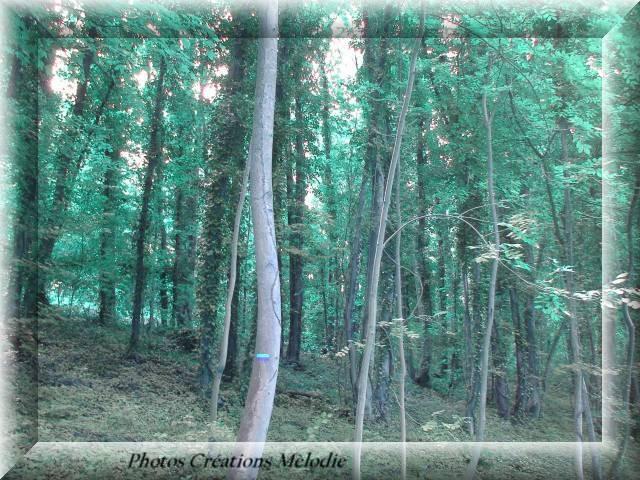 canal-de-lourq-2012-104.jpg-copiry-phot-creat-melo