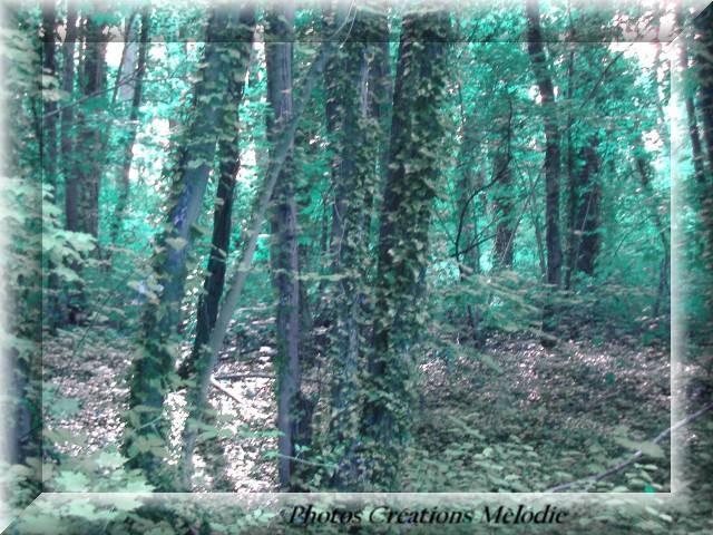 canal-de-lourq-2012-106.jpg-copiry-phot-creat-melo