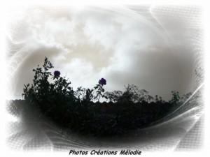 canal-de-lourq-2012-16.jpg-copiry-phot-creat-melo-300x225