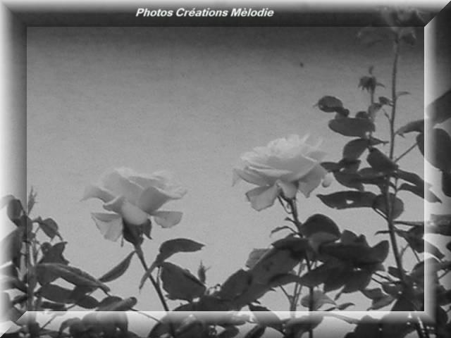 canal-de-lourq-2012-26.jpg-copiry-phot-creat-melo